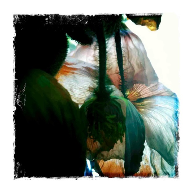 Dena Ashbolt, Rare Occurrence, 2012, Ed. 1/5,Pigment print on archival rag paper, image 88 x 88cm, $2250 framed