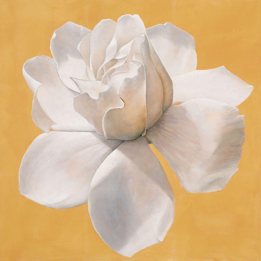 Jill Kempson, Gardenia, 2020, Oil on Canvas, 100x100 cm SOLD