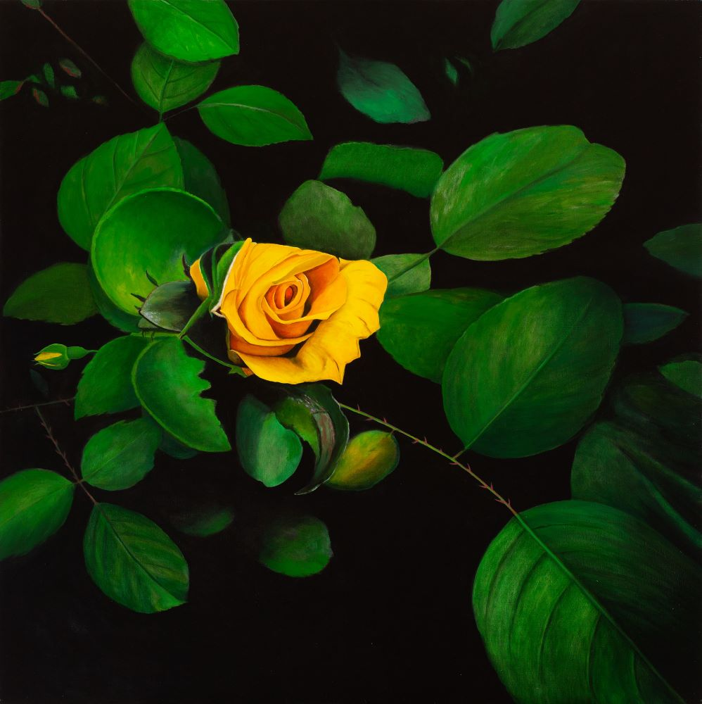 Jill Kempson, The Yellow Rose, 2020, Oil on Canvas. 100x100cm $5500